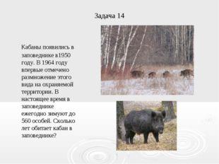 Задача 14 Кабаны появились в заповеднике в1950 году. В 1964 году впервые отме