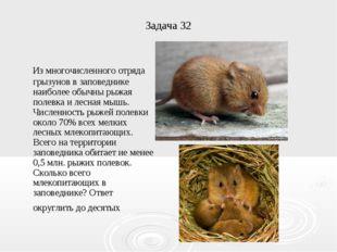 Задача 32 Из многочисленного отряда грызунов в заповеднике наиболее обычны ры