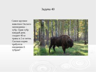 Задача 40 Самое крупное животное Окского заповедника – зубр. Один зубр каждый