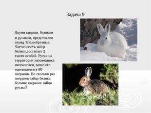 Задача 9 Двумя видами, беляком и русаком, представлен отряд Зайцеобразные. Чи