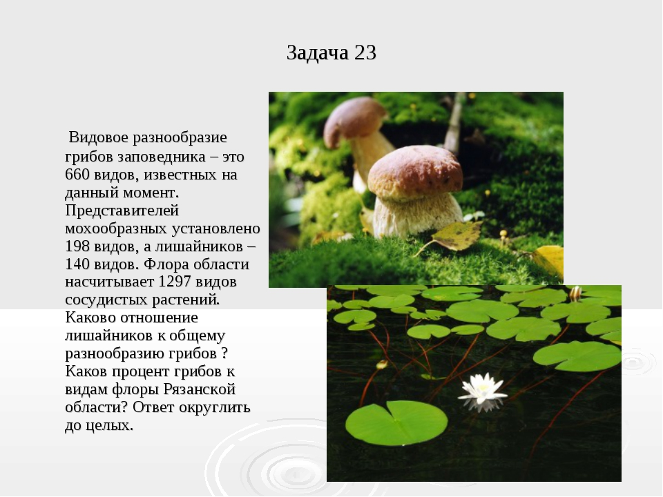 Задача 23 Видовое разнообразие грибов заповедника – это 660 видов, известных...