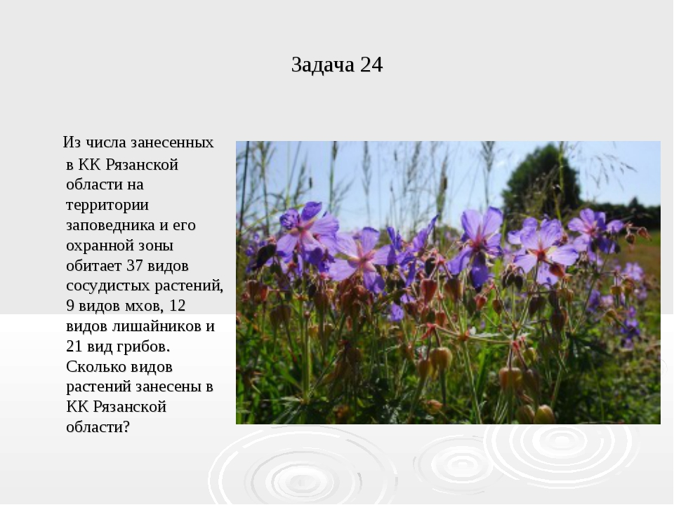 Задача 24 Из числа занесенных в КК Рязанской области на территории заповедник...
