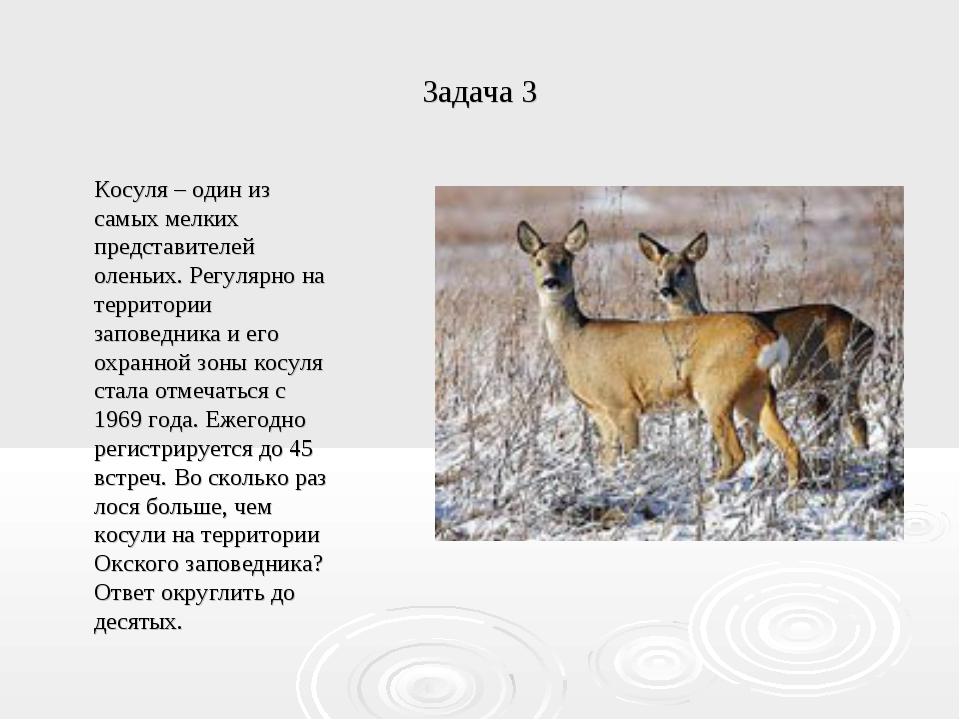 Задача 3 Косуля – один из самых мелких представителей оленьих. Регулярно на т...
