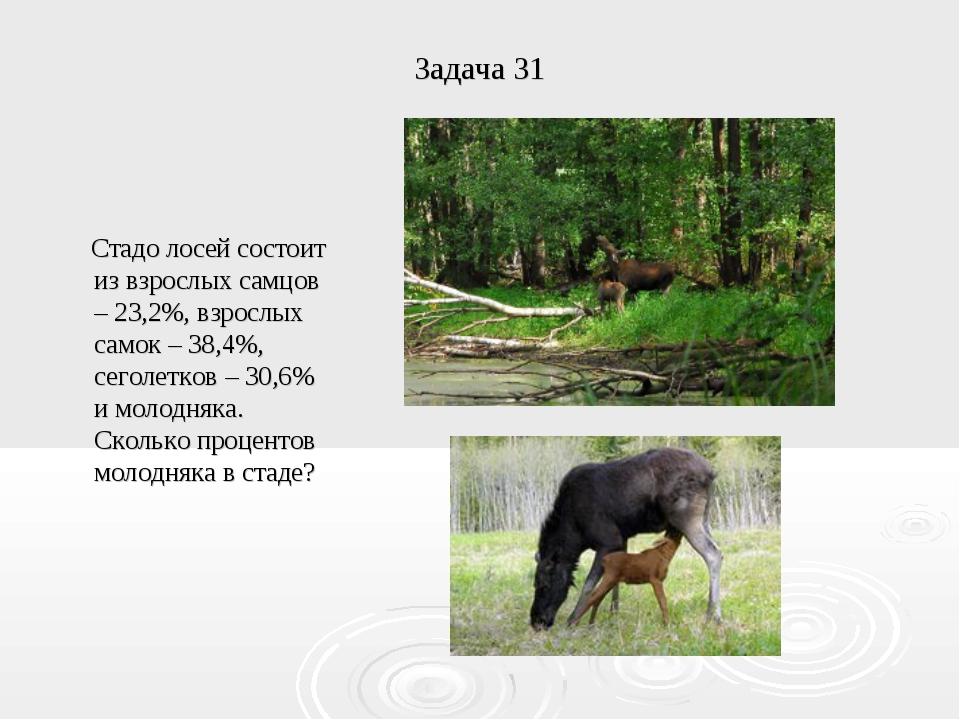 Задача 31 Стадо лосей состоит из взрослых самцов – 23,2%, взрослых самок – 38...