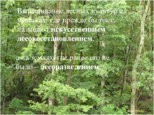 Выращивание лесных культур на участках, где прежде был лес, называют искусств