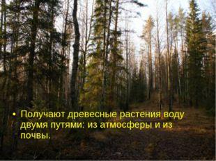 Получают древесные растения воду двумя путями: из атмосферы и из почвы.