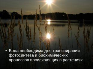 Вода необходима для транспирации фотосинтеза и биохимических процессов происх