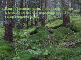 Водоохранная роль леса заключается в способности леса переводить влагу на хра