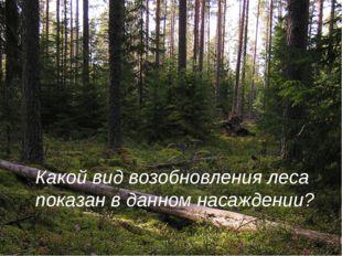 Какой вид возобновления леса показан в данном насаждении?