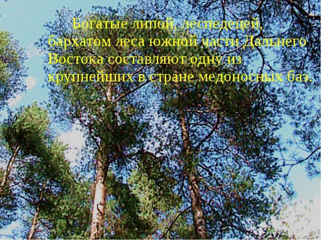 Богатые липой, леспедецей, бархатом леса южной части Дальнего Востока состав...