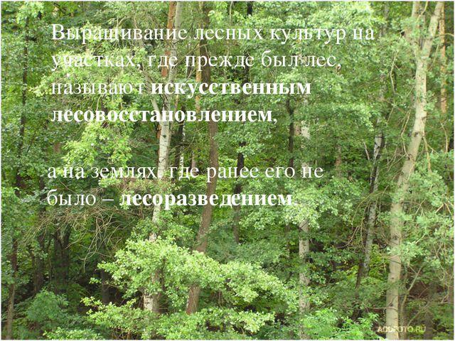 Выращивание лесных культур на участках, где прежде был лес, называют искусств...