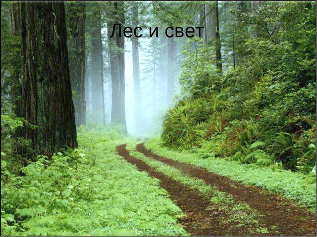 Лес и свет
