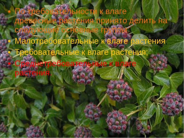 По требовательности к влаге древесные растения принято делить на следующие ос...