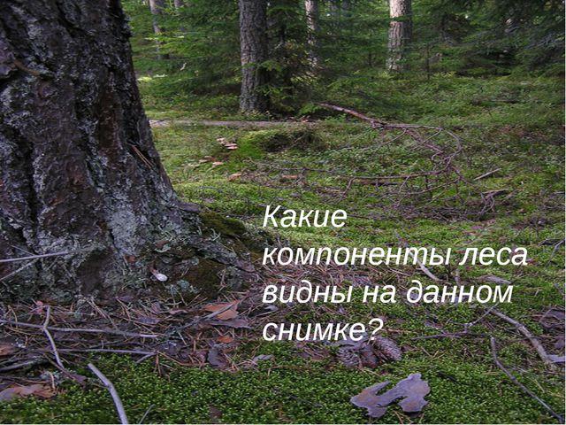 Какие компоненты леса видны на данном снимке?