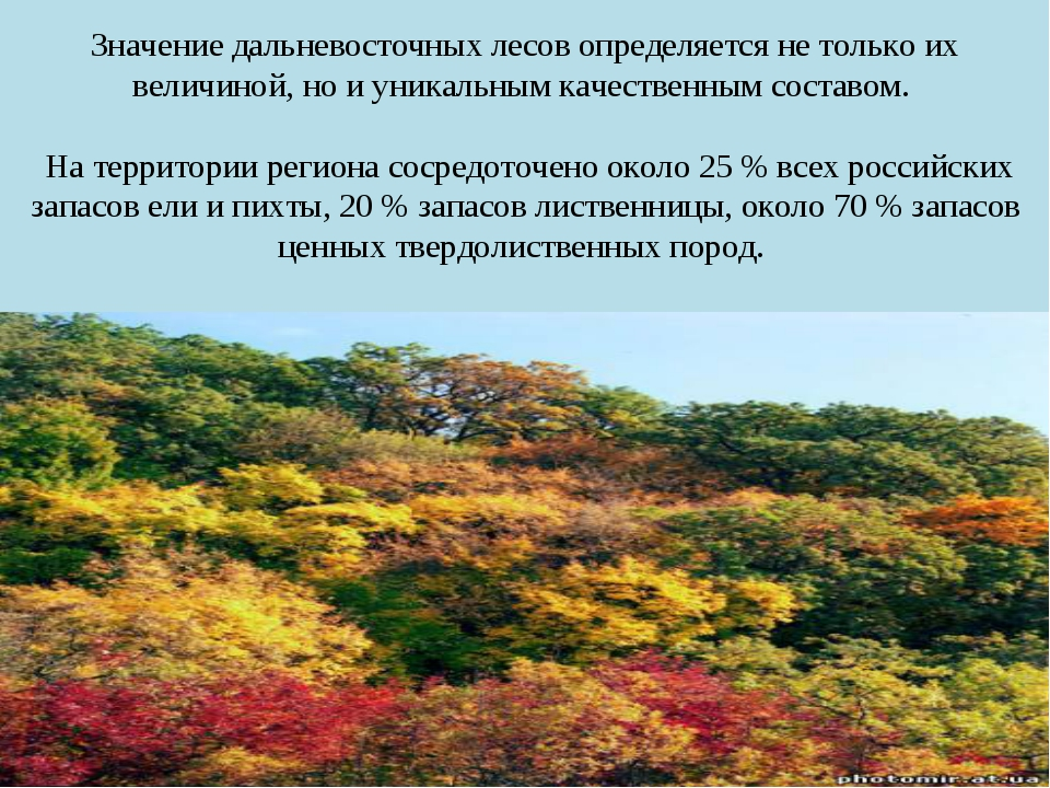 Значение дальневосточных лесов определяется не только их величиной, но и уник...