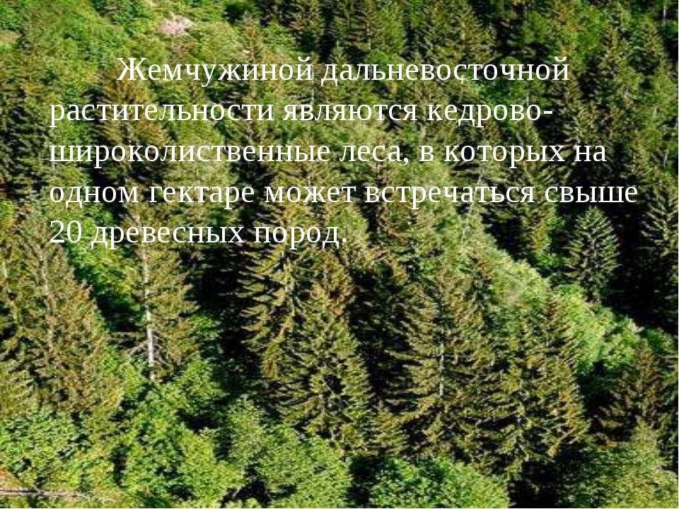 Жемчужиной дальневосточной растительности являются кедрово-широколиственные...