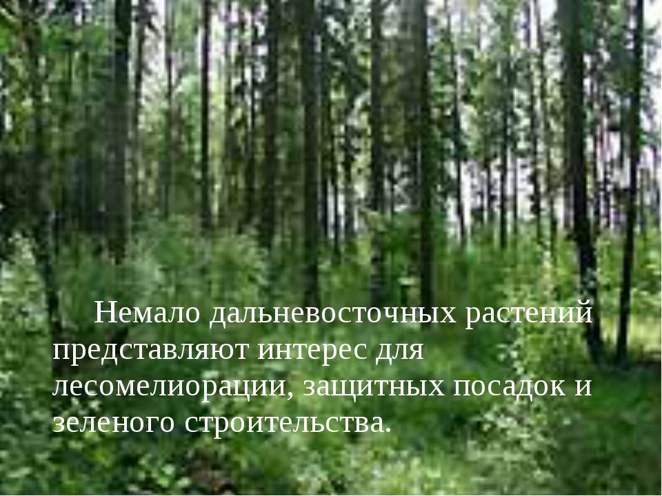 Немало дальневосточных растений представляют интерес для лесомелиорации, за...