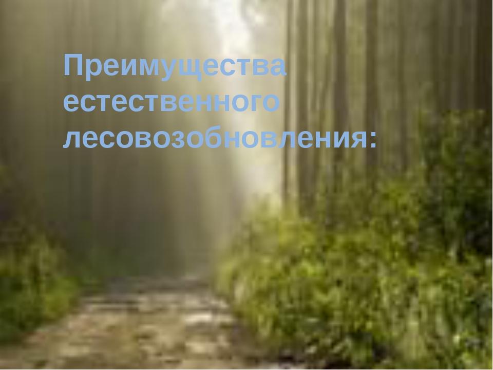 Преимущества естественного лесовозобновления: