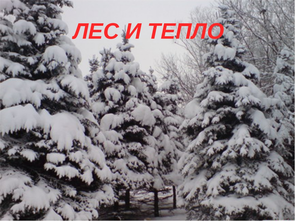 ЛЕС И ТЕПЛО