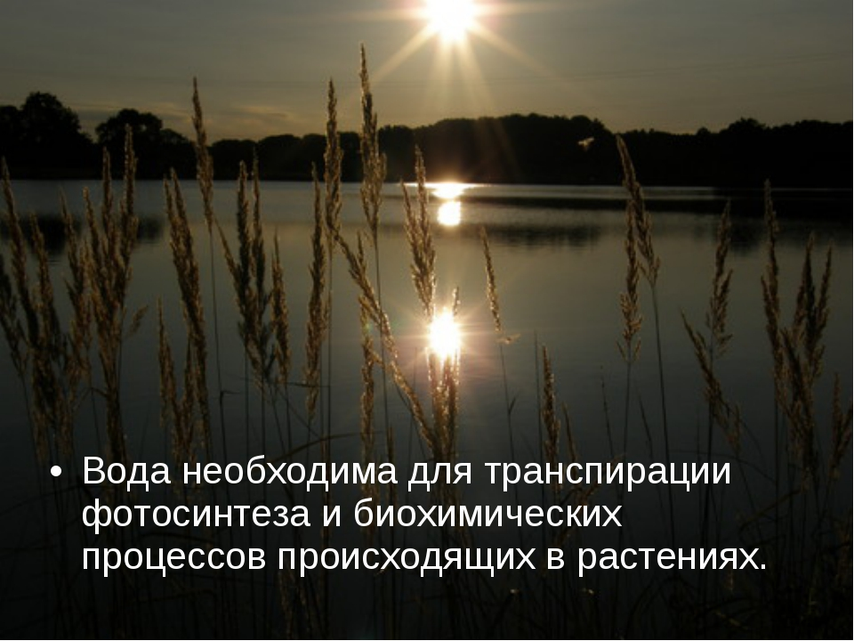Вода необходима для транспирации фотосинтеза и биохимических процессов происх...