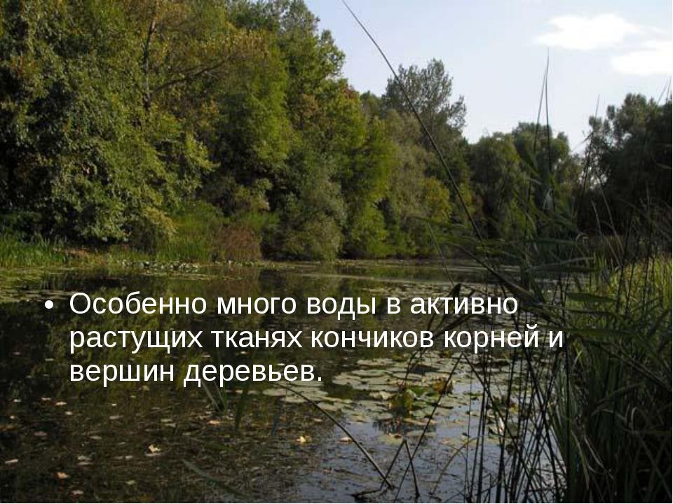 Особенно много воды в активно растущих тканях кончиков корней и вершин деревь...