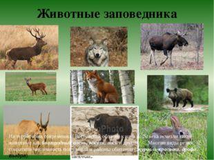 Животные заповедника На территории современной Ростовской области к началу 20