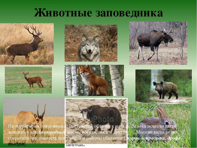 Животные заповедника На территории современной Ростовской области к началу 20...