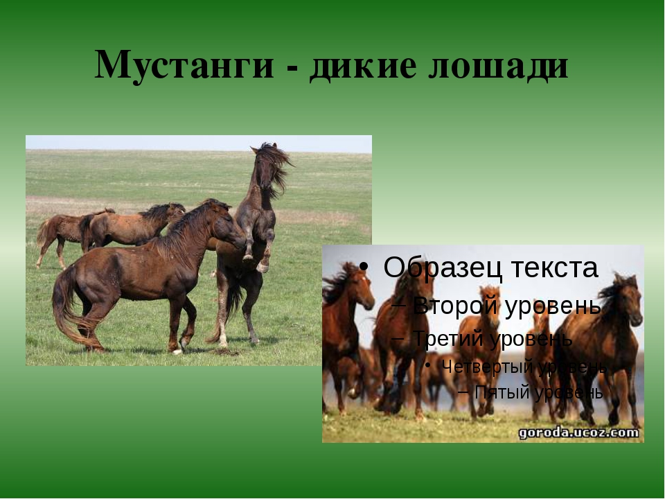 Мустанги - дикие лошади