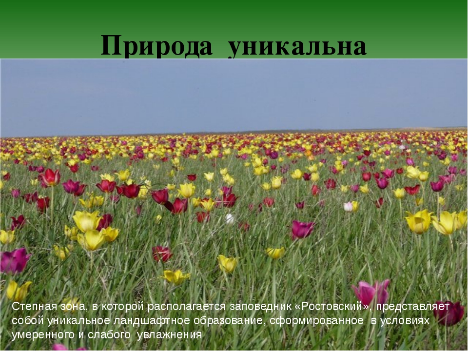 Природа уникальна Степная зона, в которой располагается заповедник «Ростовски...