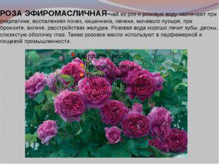 РОЗАЭФИРОМАСЛИЧНАЯ-чай из роз и розовую воду назначают при скарлатине, воспа