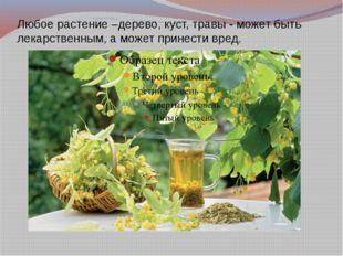 Любое растение –дерево, куст, травы - может быть лекарственным, а может прине