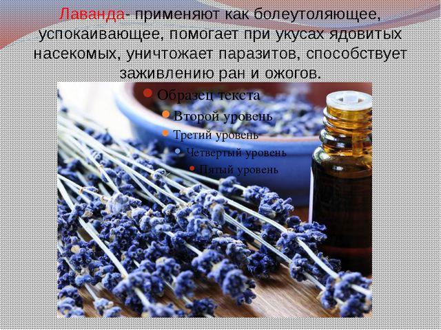 Лаванда- применяют как болеутоляющее, успокаивающее, помогает при укусах ядов...
