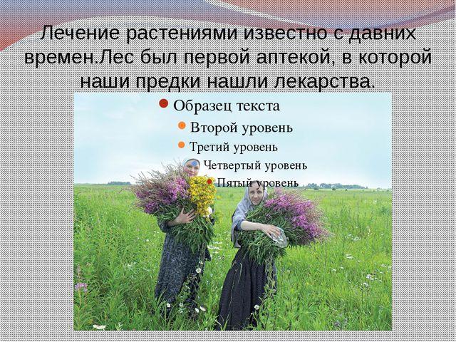 Лечение растениями известно с давних времен.Лес был первой аптекой, в которой...