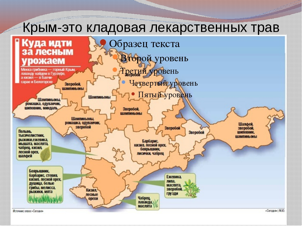 Крым-это кладовая лекарственных трав