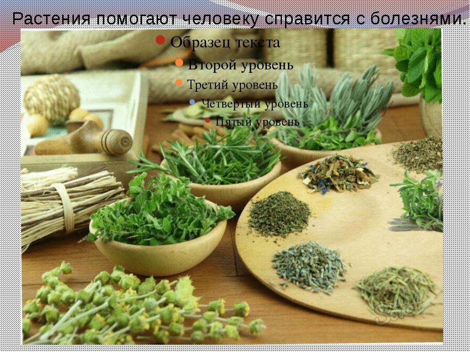 Растения помогают человеку справится с болезнями.