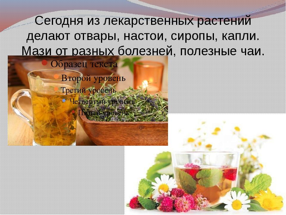 Сегодня из лекарственных растений делают отвары, настои, сиропы, капли. Мази...