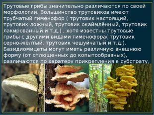 Трутовые грибы значительно различаются по своей морфологии. Большинство труто