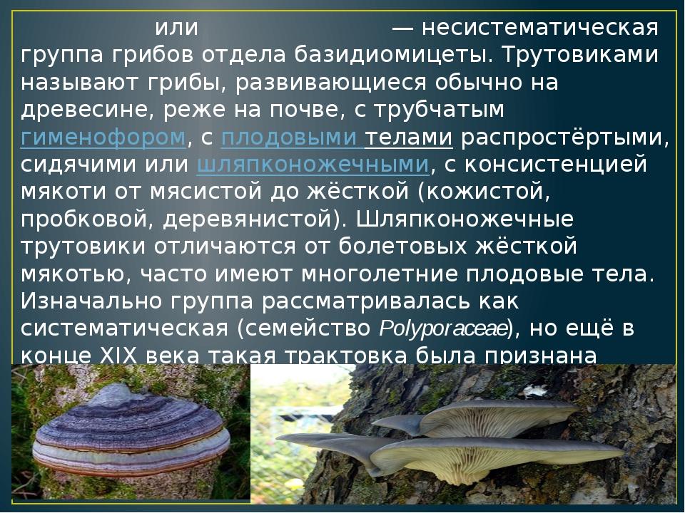 Трутовики́,илитру́товые грибы— несистематическая группагрибов отделабази...