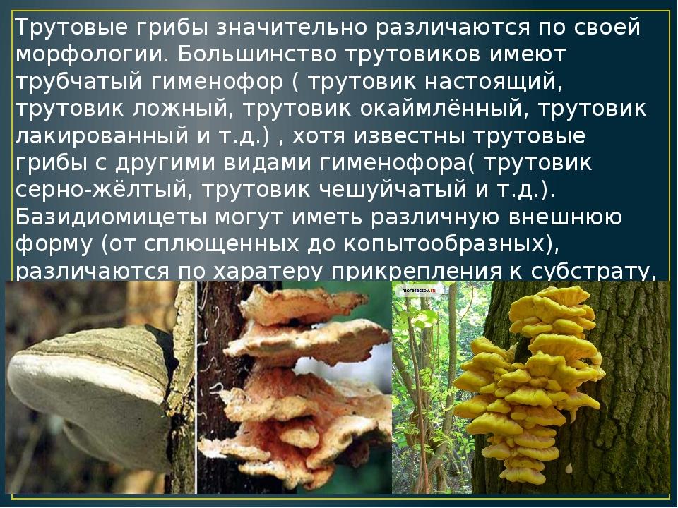 Трутовые грибы значительно различаются по своей морфологии. Большинство труто...