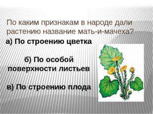 По каким признакам в народе дали растению название мать-и-мачеха? а) По строе