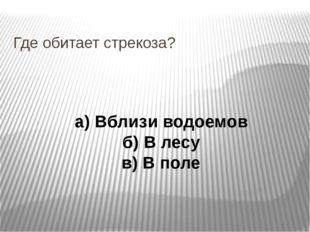 Где обитает стрекоза? а) Вблизи водоемов б) В лесу в) В поле