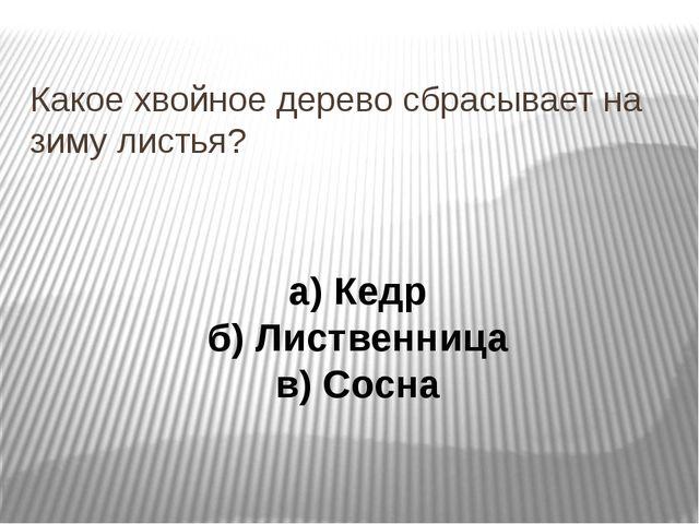 Какое хвойное дерево сбрасывает на зиму листья? а) Кедр б) Лиственница в) Со...