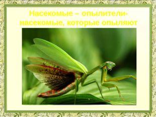 Насекомые – опылители- насекомые, которые опыляют цветы
