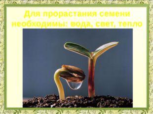 Для прорастания семени необходимы: вода, свет, тепло
