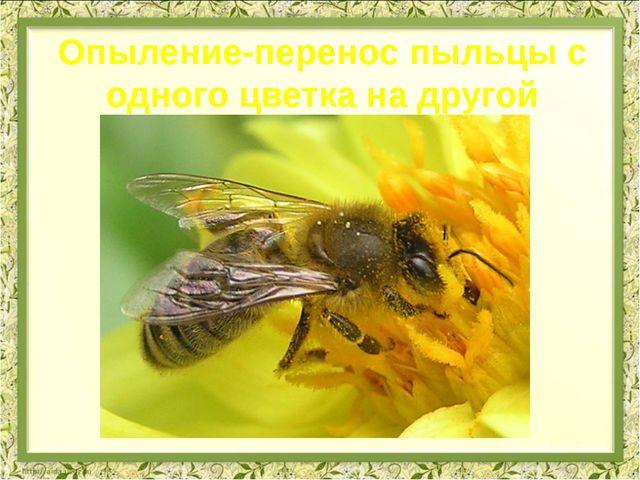 Опыление-перенос пыльцы с одного цветка на другой