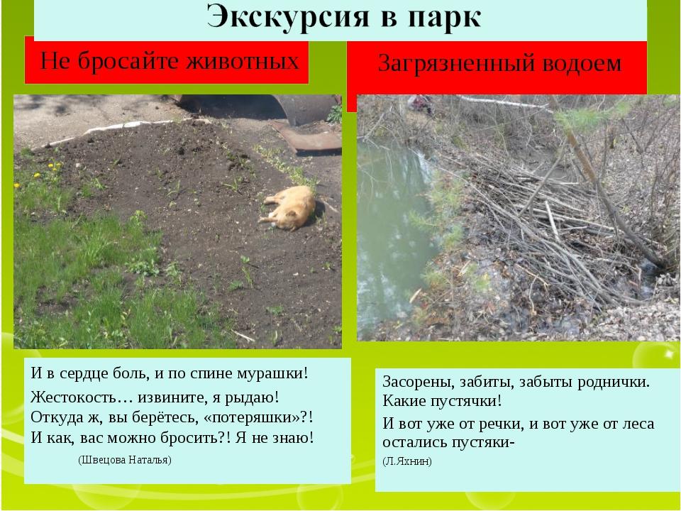Не бросайте животных Загрязненный водоем  Засорены, забиты, забыты роднички....