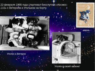 22 февраля 1966 года стартовал биоспутник «Космос-110» с Ветерком и Угольком