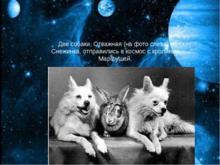 Две собаки, Отважная (на фото слева) и Снежинка, отправились в космос с кроли