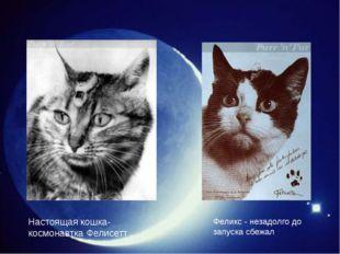 Настоящая кошка-космонавтка Фелисетт