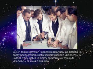 СССР также запускал черепах в орбитальные полёты на борту беспилотного космич